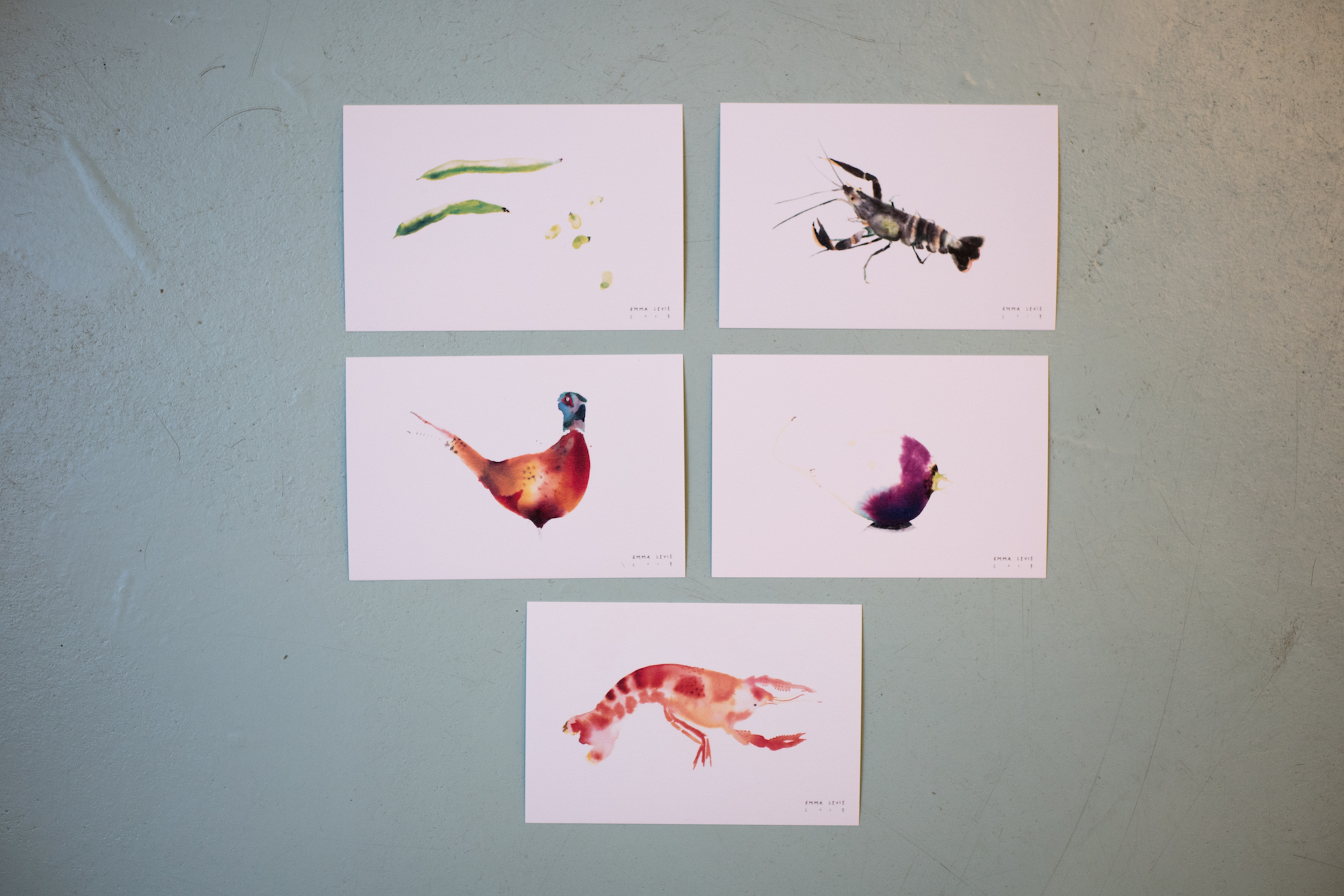 Illustraties Emma Levie